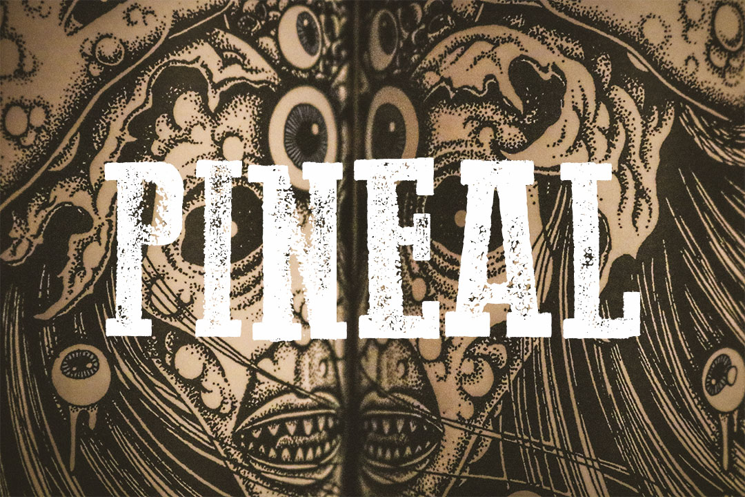TIRE HANDS PINEAL